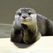 Otter Meme - please tell me more otters pinterest otters animal and
