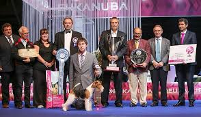 yarrow affenpinscher to sum up best dogs of 2014