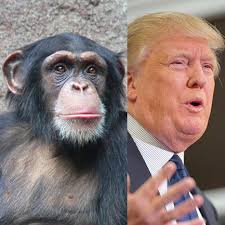 Armchair Psychology Definition Is Donald Trump An Alpha Male Psychology Today