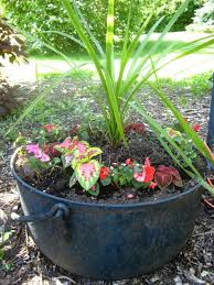 potted plants for shaded porch darxxidecom