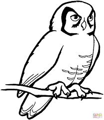 perched barn owl coloring page free printable coloring pages