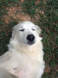 Meme Making Apps - can you guys recommend me any good meme making apps pic of doggo