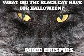 Halloween Cat Meme - halloween joke black cat meme 2 what did the black cat have for