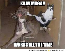 Fu Meme - krav maga krav maga cat fu meme generator captionator