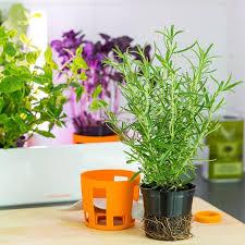 dyrk dine egne urter indendørs køkkenhave