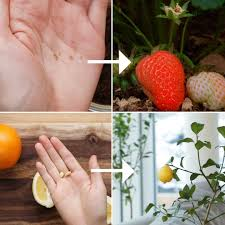 how to regrow fruit from your kitchen tasty vegetarian
