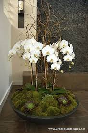 orchid arrangements best 25 orchid arrangements ideas on orchid flower