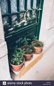 home plants and herbs in pots on old house veranda vintage door