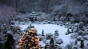 winter star view tree magic beautiful colorful mystic landscape