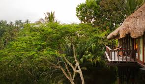 eco guide to bali how to go green