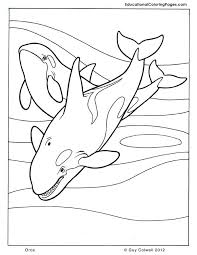 coloring page killer whale orca coloring pages killer whale coloring pages killer whale orca