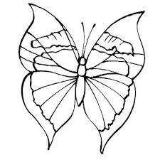 50 coloring pages butterflies images drawings