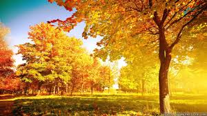 fall tree wallpaper wallpapersafari