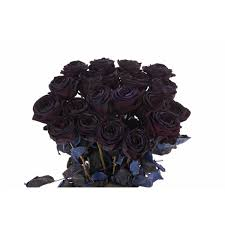 black roses anti s day black roses flower muse