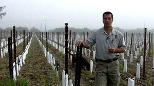 in the vineyard effects of narrow spacing of vines youtube