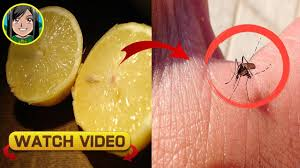 a natural remedy to get rid of mosquitoes which has a beneficial