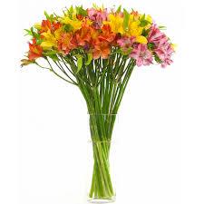 november seasonal flowers flowers in season october flowers flower and wedding