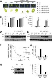 monoubiquitin dependent endocytosis of the iron regulated