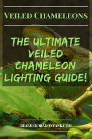 bearded dragon lighting guide veiled chameleon lighting guide bearded dragon tank