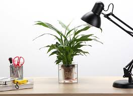 plant on desk double deck self watering desk potted plant feelgift
