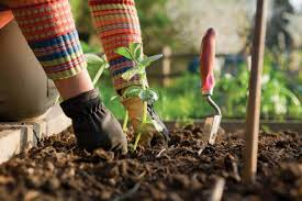 4 tips for winter garden preparation all blogroll the