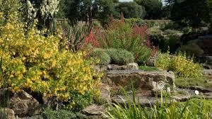 plants for rock gardens rock garden kew