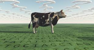 genetics of milking characteristics in dairy cows agriculture