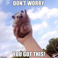 Motivational Meme Generator - motivational hedgehog is motivational imgflip
