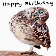 Happy Birthday Owl Meme - 200 funny birthday memes birthday memes collections