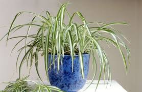 Fragrant Indoor Plants Low Light - 7 houseplants for low light conditions