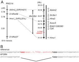 Linkage Map Deletion Of A Conserved Regulatory Element Required For Hmx1