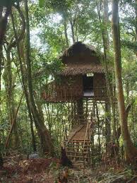Top 3 Treehouse Hotels in Malaysia