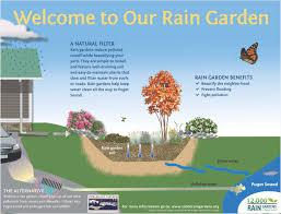 sound native plants resource library 12 000 rain gardens