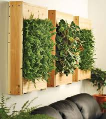 indoor living wall planter apartment therapy