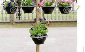 indoor flowering plants plant amazing indoor flowering plants table of contents spring