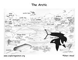 arctic and the tundra