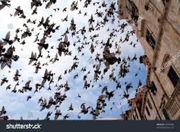 birds over town old dubrovnik croatia stock photo 27504580