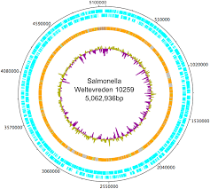 a phylogenetic and phenotypic analysis of salmonella enterica