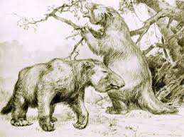ancient giant sloths vegetarians scitech gma