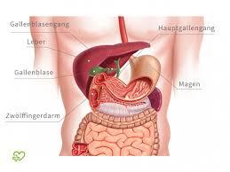 leberschwäche symptome gallensteine symptome ursachen behandlung onmeda de