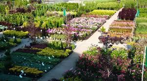 nursery trees shrubs u0026 roses canton road garden center akron