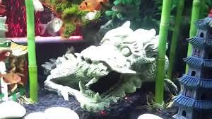 Asian Themed Fish Tank Decorations My Fish Tank Asian Dragon Theme Aquarium Youtube