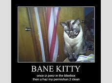 Funny Cat Memes Tumblr - funny cat memes tumblr takvim kalender hd