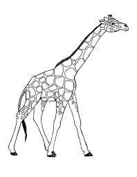 Giraffe Coloring Pages Awesome Giraffe Coloring Page Netart by Giraffe Coloring Pages