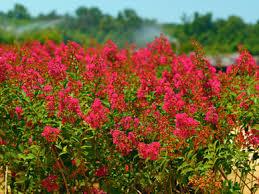 ornamental nursery crops production encyclopedia of alabama