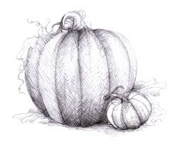 magellin blog pumpkin drawing
