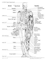 human body bones bones in the human body human body bones name