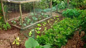 Vegetable Gardens In Florida by 6th Annual Monk Botanical Gardens Green Saturday Plant Sale Helps