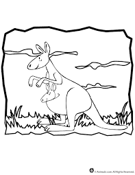 kangaroo picture to color free download clip art free clip art
