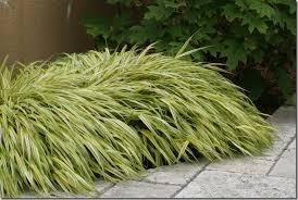 grassy favorites new and coast gardening